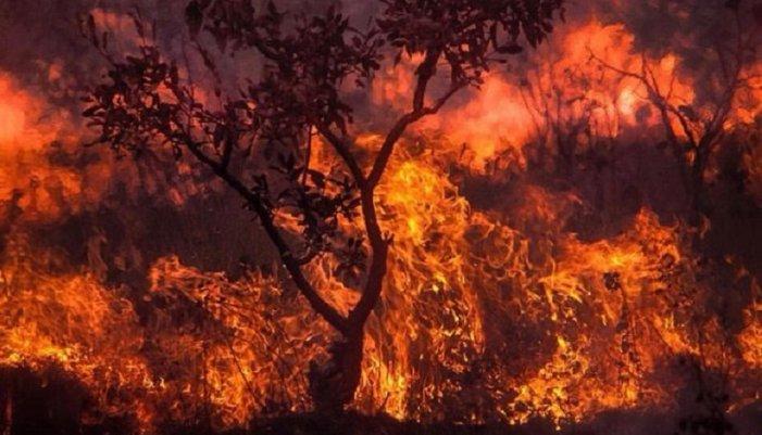 La Amazonía se quema